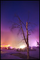 Tree, thermal steam, bathhouse, and stars. Chena Hot Springs, Alaska, USA (color)