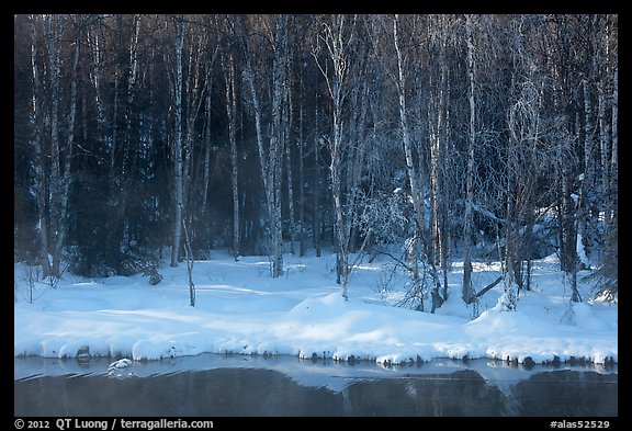 Stream and forest in winter. Chena Hot Springs, Alaska, USA