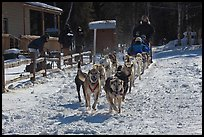 Huskies pulling sled as spectators watch. Chena Hot Springs, Alaska, USA ( color)