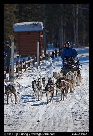 Recreational dog sledding. Chena Hot Springs, Alaska, USA (color)