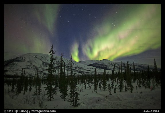 Aurora Borealis illuminating winter sky and forest. Alaska, USA (color)