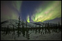 Aurora Borealis illuminating winter sky and forest. Alaska, USA ( color)