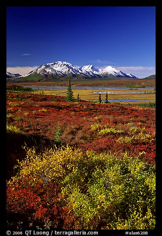 Tundra in fall colors and snow covered peaks. Alaska, USA (color)
