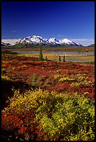 Tundra in fall colors and snow covered peaks. Alaska, USA