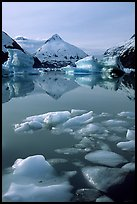 Floating ice in Portage Lake with mountain reflections. Alaska, USA