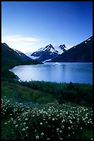 Wildflowers and Portage Lake at dusk. Alaska, USA