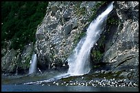 Waterfall and Seabirds. Prince William Sound, Alaska, USA ( color)