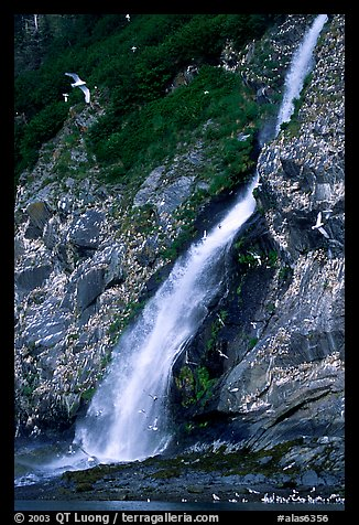 Waterfall and Seabirds. Prince William Sound, Alaska, USA
