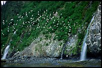 Waterfalls and Seabirds. Prince William Sound, Alaska, USA