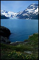 Lupine, mountains, and glaciers across Harriman Fjord. Prince William Sound, Alaska, USA ( color)