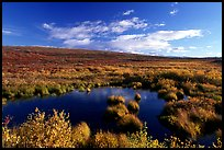 Tundra in autum colors and pond. Alaska, USA