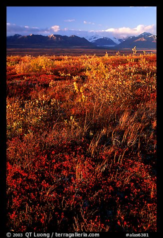 Tundra and mountains and sunset. Alaska, USA
