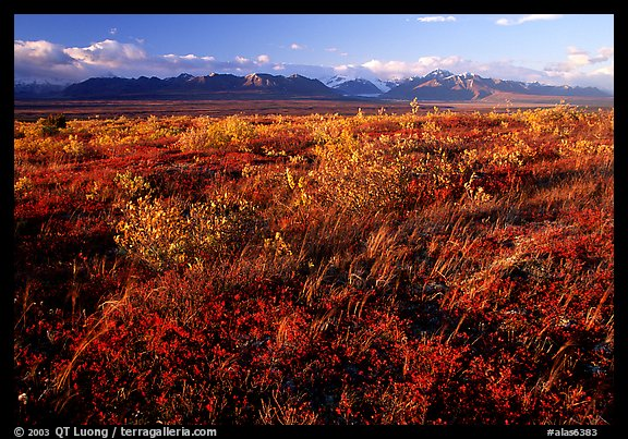 Tundra and mountains at sunset. Alaska, USA (color)