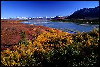 Susitna River and fall colors on the tundra. Denali Highway, Central Alaska, USA