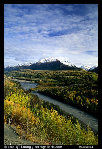 Autumn Aspens and Chugach range, late afternoon. Alaska, USA (color)