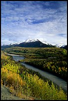 Autumn Aspens and Chugach range, late afternoon. Alaska, USA