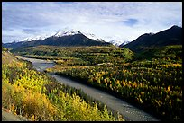 Autumn Aspens, Matanuska River, and Chugach mountains. Glenn Highway, Central Alaska, USA
