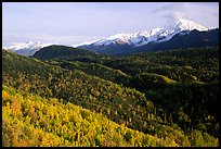 Aspens in fall colors and Chugach mountain, late afternoons. Glenn Highway, Central Alaska, USA