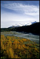 Aspens in fall colors,  Chugach mountains, winding river. Alaska, USA
