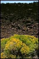 Sage and slope covered with lava, Lava Beds National Monument. California, USA (color)
