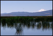 Mt Shasta seen from a marsh in the North. California, USA ( color)