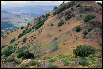 Group of Hikers on a distant trail, Mt Diablo State Park. California, USA