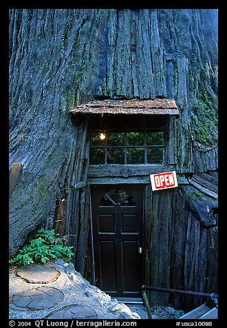 Entrance of the World Famous Tree House, near Leggett. California, USA (color)