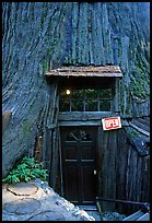 Entrance of the World Famous Tree House, near Leggett. California, USA ( color)