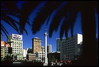 Union square framed by palm trees, afternoon. San Francisco, California, USA (color)