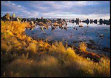 Grasses and Tufa towers, morning. Mono Lake, California, USA ( color)