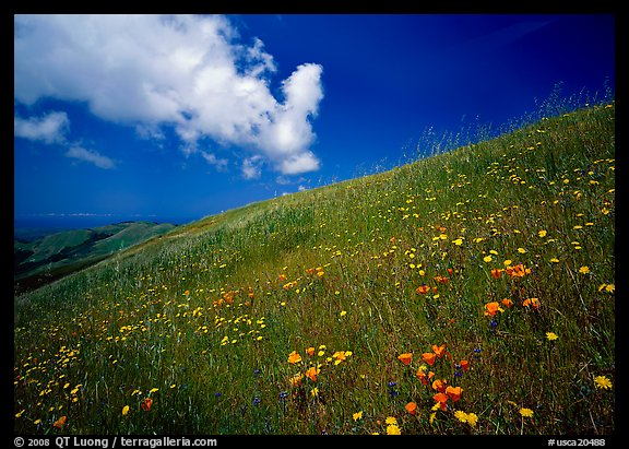 Hillside with wildflowers and cloud, Russian Ridge. Palo Alto,  California, USA