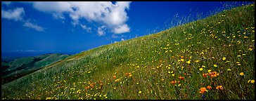 Landscape with grassy hills, wildflowers, and cloud. Palo Alto,  California, USA (Panoramic color)