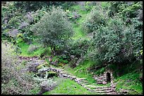 Pathway and stairs, Alum Rock Park. San Jose, California, USA ( color)