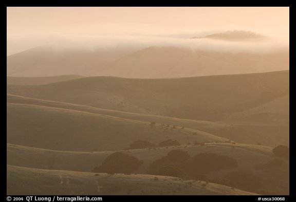 Rolling Hills and fog, sunrise. California, USA (color)