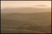 Rolling Hills and fog, sunrise, Fort Ord National Monument. California, USA