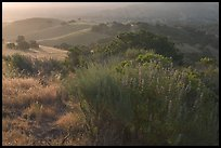 Bush and hills, sunrise, Fort Ord National Monument. California, USA ( color)