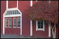 Door and tree in fall color, Red Barn. Stanford University, California, USA (color)