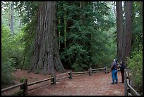 Visitors standing amongst redwood trees. Big Basin Redwoods State Park,  California, USA (color)