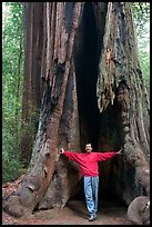 Visitor standing at the base of a hollowed-out redwood tree. Big Basin Redwoods State Park,  California, USA (color)