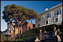 Tree and houses on hill, late afternoon. San Francisco, California, USA ( color)