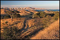 Rural path amongst oak and golden hills, San Luis Reservoir State Rec Area. California, USA