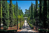 Gates, cypress and path, Villa Montalvo. Saragota,  California, USA (color)