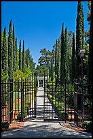 Gates in cypress trees in garden, Villa Montalvo. Saragota,  California, USA