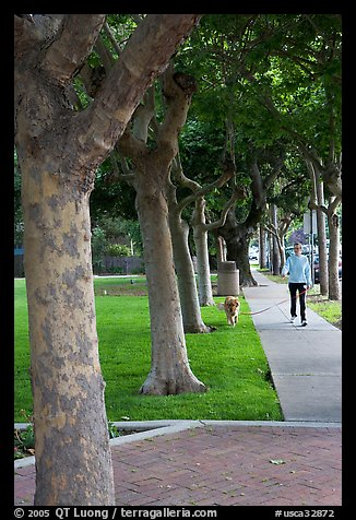 Woman walking her dog. Menlo Park,  California, USA
