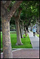 Woman walking her dog. Menlo Park,  California, USA (color)