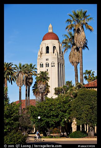 Hoover Tower seen from the Main  Quad, late afternoon. Stanford University, California, USA (color)