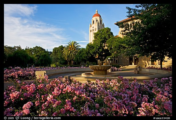 Hoover Tower and bed of roses, late afternoon. Stanford University, California, USA (color)