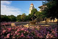 Hoover Tower and bed of roses, late afternoon. Stanford University, California, USA