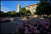 Bing Wing of Green Library and Hoover Tower,  late afternoon. Stanford University, California, USA (color)