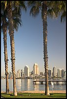 Skyline framed by palm trees from Coronado. San Diego, California, USA
